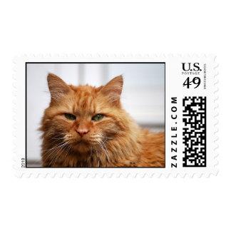 Franqueo noruego del gato del bosque timbre postal