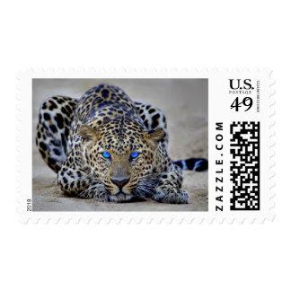 Franqueo observado azul de Jaguar