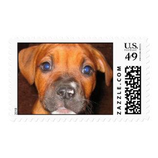 franqueo pitty sello postal