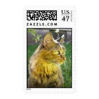 Franqueo precioso pensativo del gatito sellos