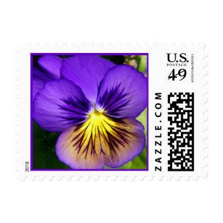 Franqueo púrpura bonito del pensamiento timbres postales