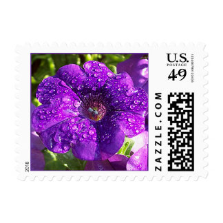 Franqueo púrpura de la flor de la petunia