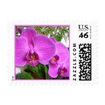 Franqueo púrpura de la orquídea