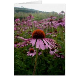 Franqueo púrpura del campo de flor el | tarjeta de felicitación