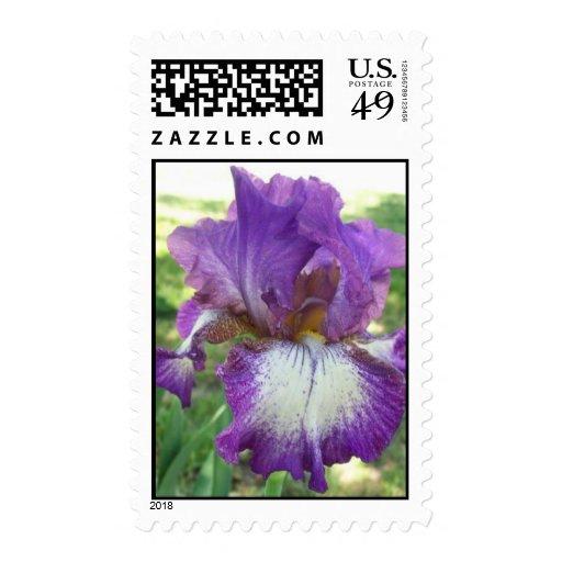 Franqueo púrpura del iris