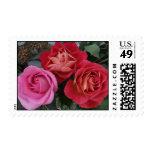 Franqueo rojo y rosado de los rosas