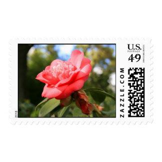 Franqueo rosado de la flor de Camelia