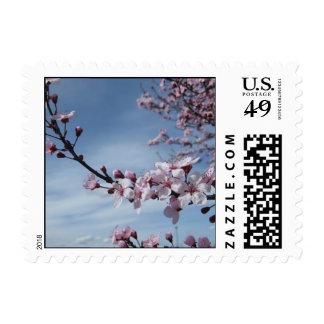 Franqueo rosado de la flor de cerezo del zen
