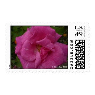 Franqueo rosado de la flor el | estampillas