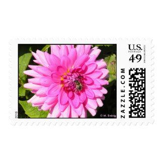 Franqueo rosado de la flor y de la abeja sello postal