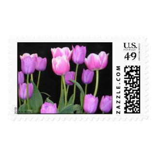 Franqueo rosado de los tulipanes sellos