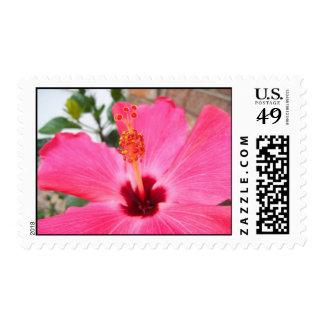 Franqueo rosado del hibisco