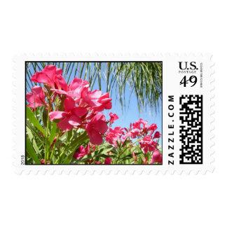 Franqueo rosado floreciente de los Oleanders