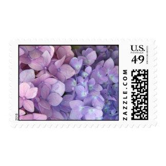Franqueo rosado y púrpura del Hydrangea Sello Postal