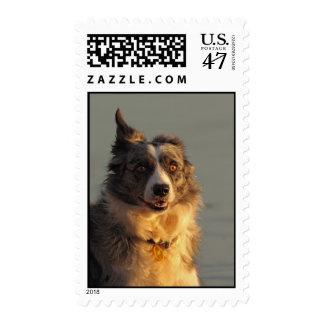 Franqueo/sello corrientes del perro del border timbres postales