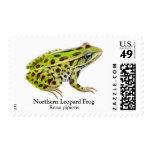 Franqueo septentrional de la rana de leopardo estampilla