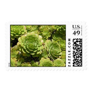 Franqueo suculento timbres postales