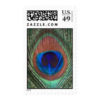 Franqueo verde de la pluma del pavo real
