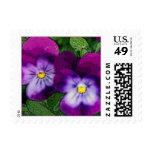 Franqueo violeta púrpura de la flor