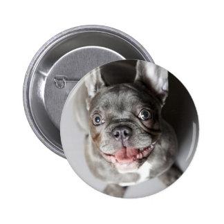Französische Bulldogge Buttons