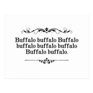 Frase del búfalo del búfalo tarjetas postales