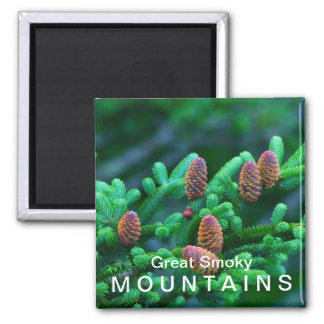 Fraser Fir - Great Smoky Mountains National Park 2 Inch Square Magnet