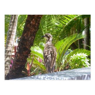 Fraser Island Bird Postcard