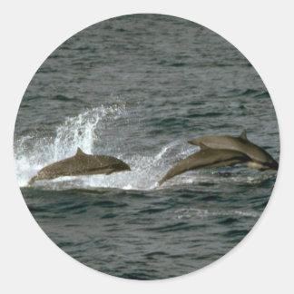 Fraser's dolphin classic round sticker