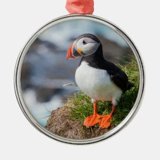 Fratercula Arctica del frailecillo atlántico Ornamento Para Arbol De Navidad