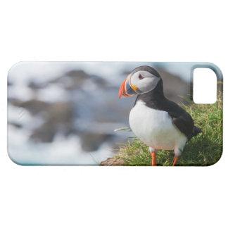 Fratercula Arctica del frailecillo atlántico iPhone 5 Case-Mate Cobertura
