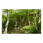 Frazier Discovery Trail at Shenandoah Photography Poster