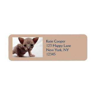 Freaky Cute Furless Sphynx Kitten Label
