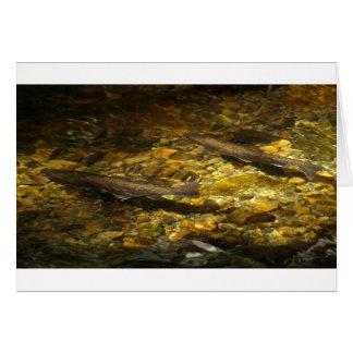 Freash water Trout. Greeting Card
