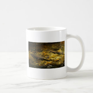 Freash water Trout. Coffee Mugs