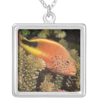 Freckled hawkfish perches on stony corals square pendant necklace