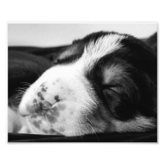 Freckled Nose Puppy Photograph