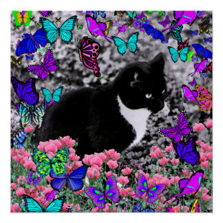 Freckles in Butterflies III, Tux Kitty Cat Perfect Poster