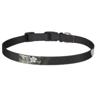 Freckles in Flowers II, Black and White Tuxedo Cat Pet Collar