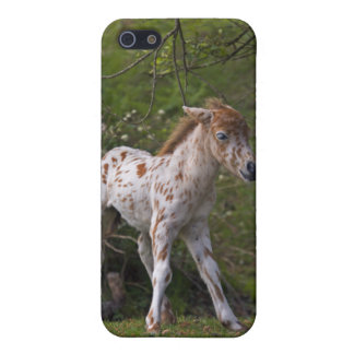 Freckles iPhone 4 Speck Case Cases For iPhone 5