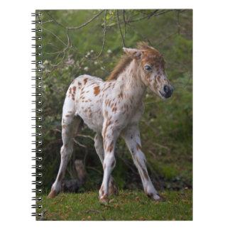 Freckles Notebook