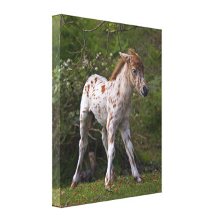 Freckles Wrapped Canvas Stretched Canvas Prints