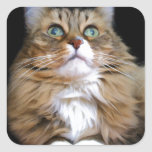 Fred the Cat Square Sticker