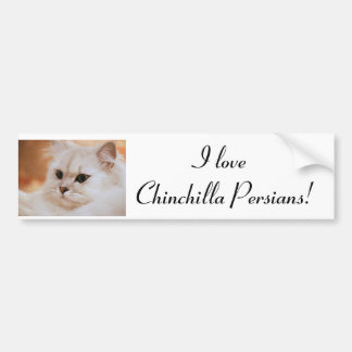 Freddie ~ Chinchilla Persians Bumper Sticker