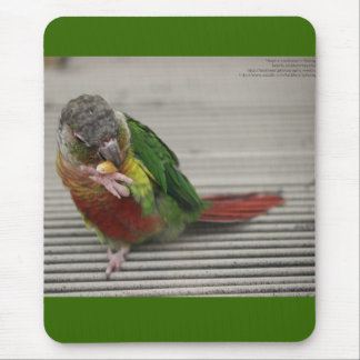 Freddy the Conure Mouse Pad