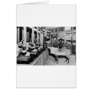 Frederick & Nelson Raindeer in the Window Card