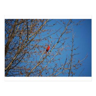 Free Bird Postcard