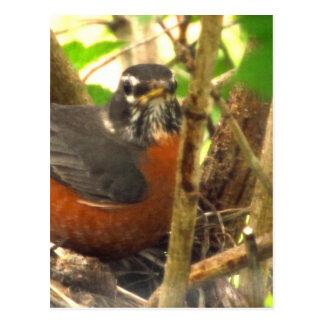 free-bird postcard