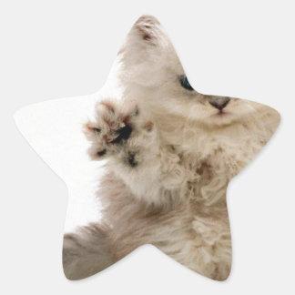 Free Hugs Kitten Star Sticker