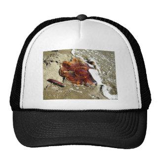 Free Jelly Trucker Hat