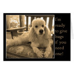 Free Poodle Hugs For A Friend Card